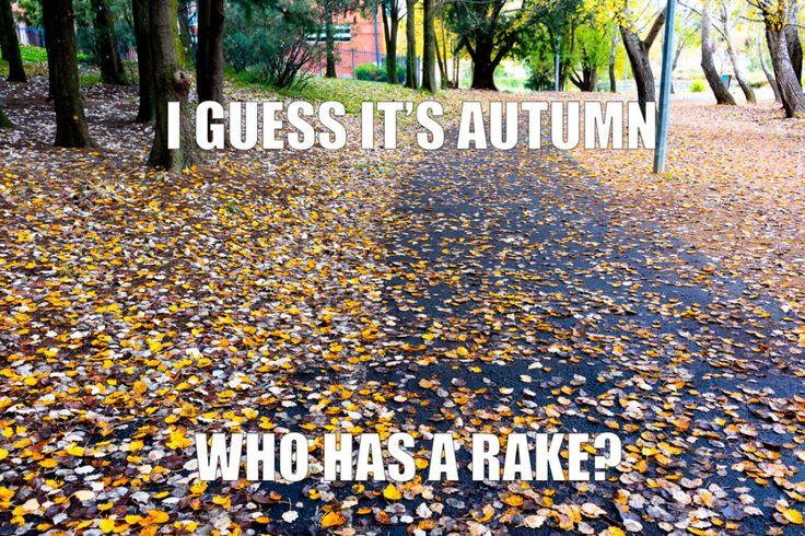 Autumn leaves near John Knight Memorial Park, Lake Ginninderra