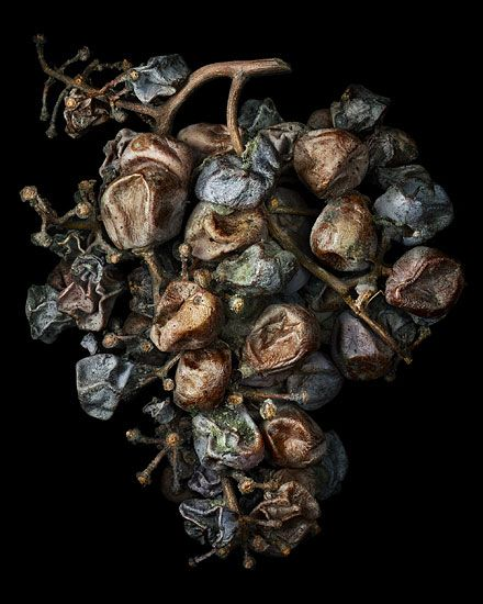 Nobel Rot 4, photograph by Peter Lippmann