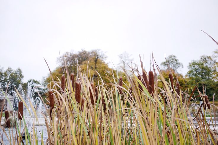 Autumn Tales from London by Amé Story - Italian Garden at Hyde Park