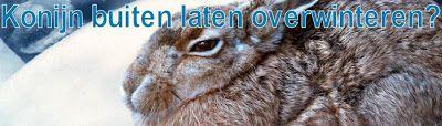 Het Vrolijke Konijnenhol: Konijnen veilig de winter door
