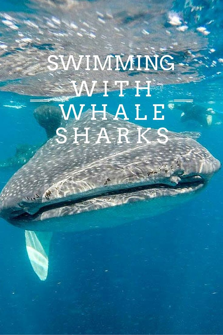 Swimming With Whale Sharks in Mexico – A Huge Bucketlist Item Complete