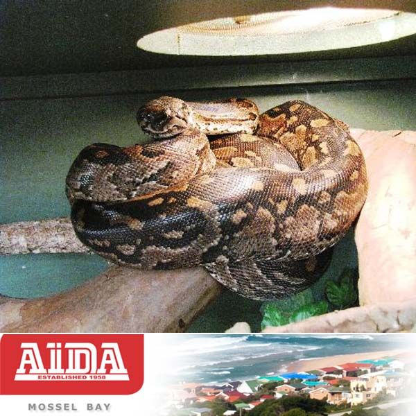 Attractions in the Garden Route. Lawnwood Snake Park (Plettenberg Bay, South Africa) Visit our website here: http://bit.ly/JnkX3U #snakepark #attractions #gardenroute
