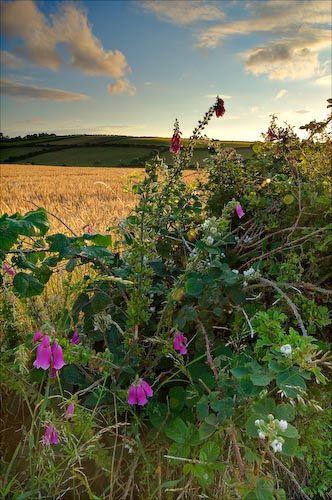 Exploring summer hedgerows. @White Stuff UK #makesmehappy