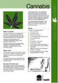 This easy to read fact sheet gives the facts on cannabis – the short and long term effects on your body and life, interaction with other drugs, cannabis use during pregnancy, quitting, tolerance and dependence, withdrawal and more.