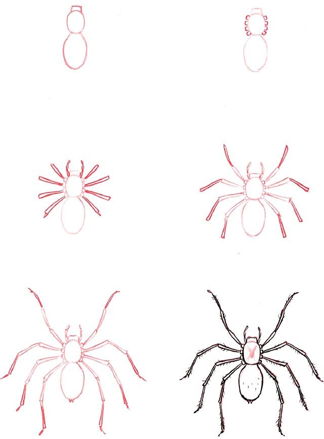 Learn to draw: Spider