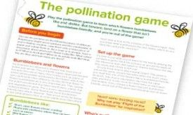 Bees The Pollination Game Quick Activity Image
