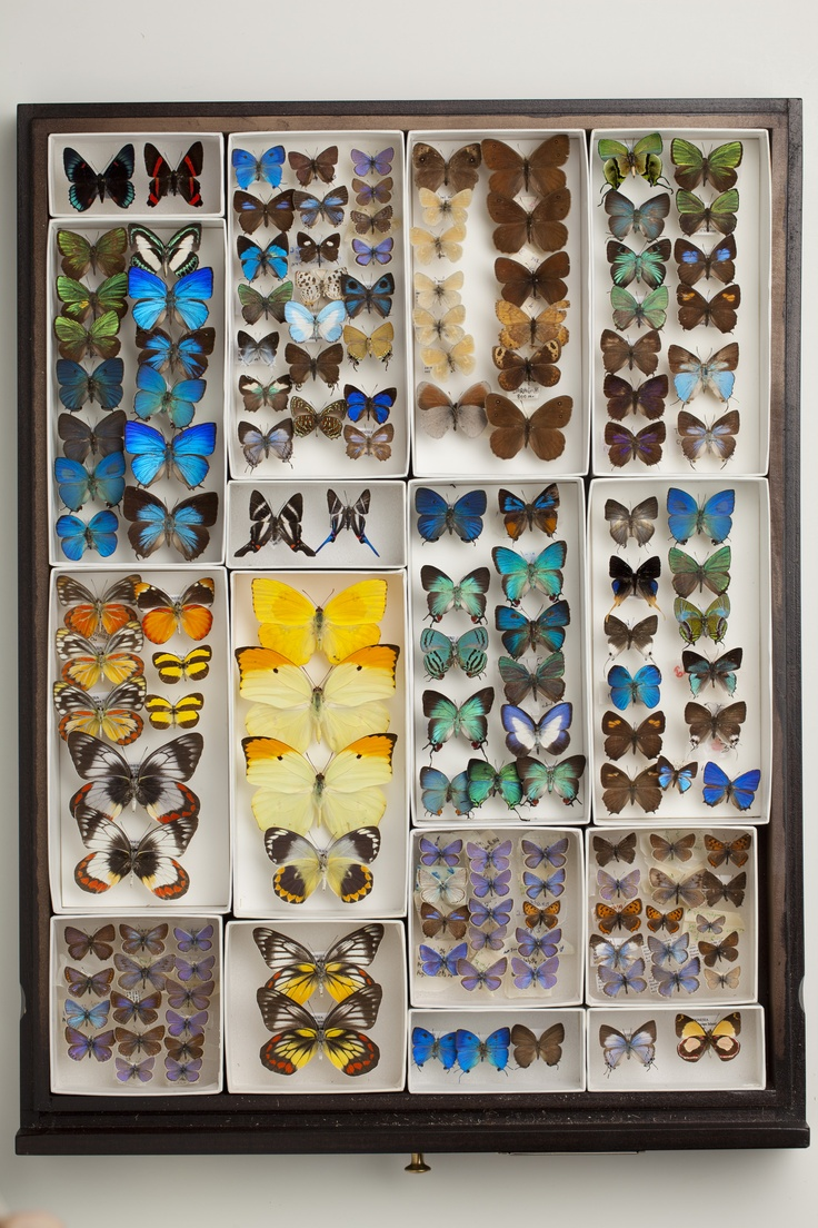 butterfly color diversity at Carnegie museum of natural history. image credit: Josh Franzos | via Creativity ~ Cityhaüs Design