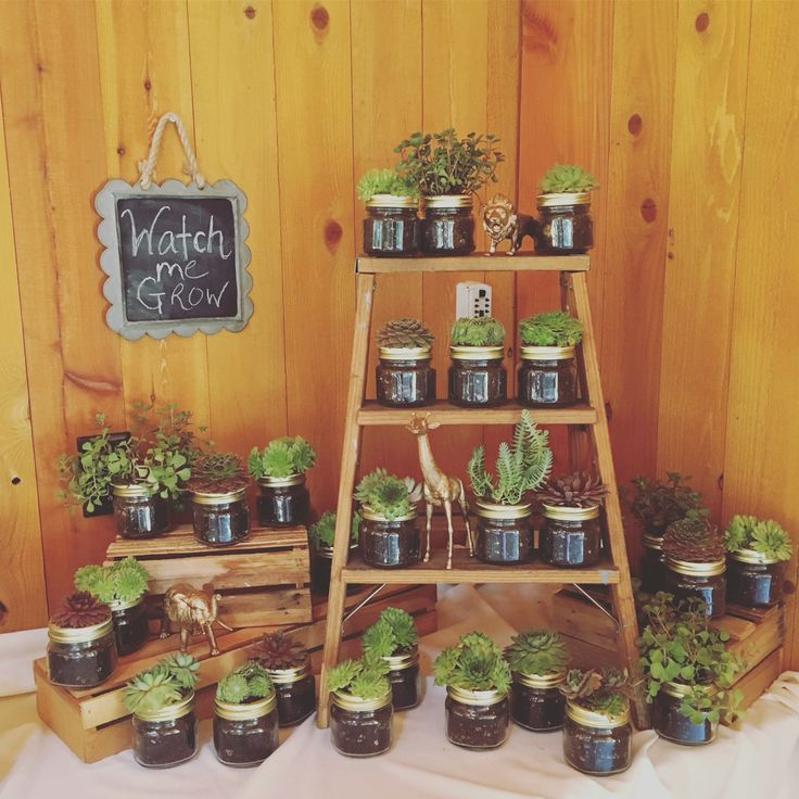 """Baby shower succulent favors in mason jars.""""Watch Me Grow"""""""