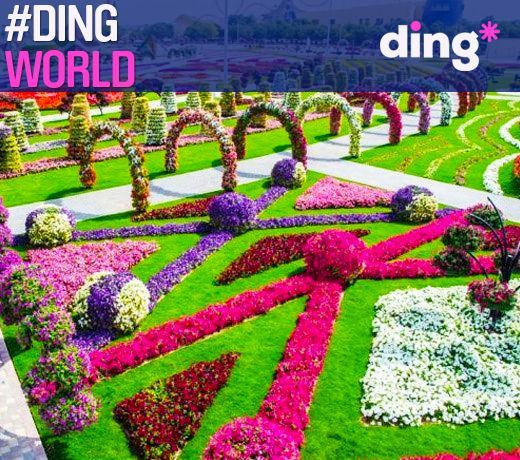 Where in the world would you find this amazingly beautiful garden of colourful flowers? #dingworld
