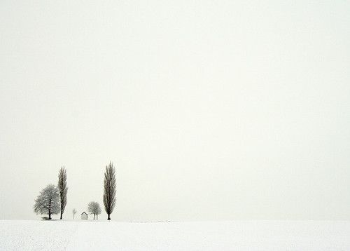 winter trees. Awesome use of negative space and minimal color palette.