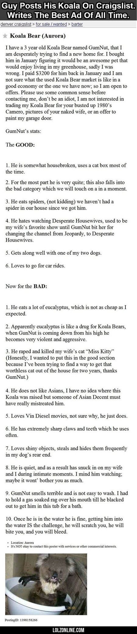 Guy Posts His Koala On Craigslist#funny #lol #lolzonline