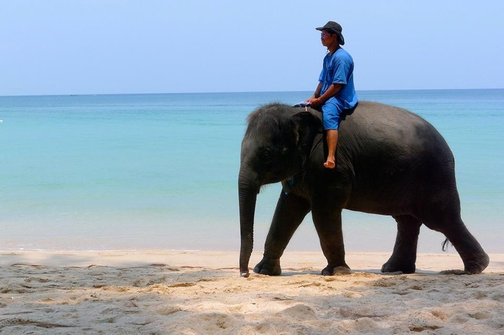 How about an elephant ride on the beach?