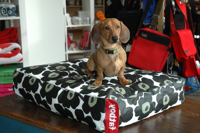 Quickly and Simply How to Make a Dog Bed