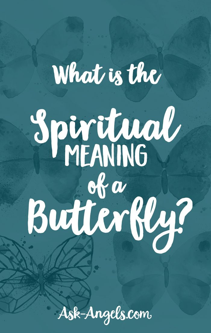 Best 25+ Butterfly Meaning Ideas On Pinterest