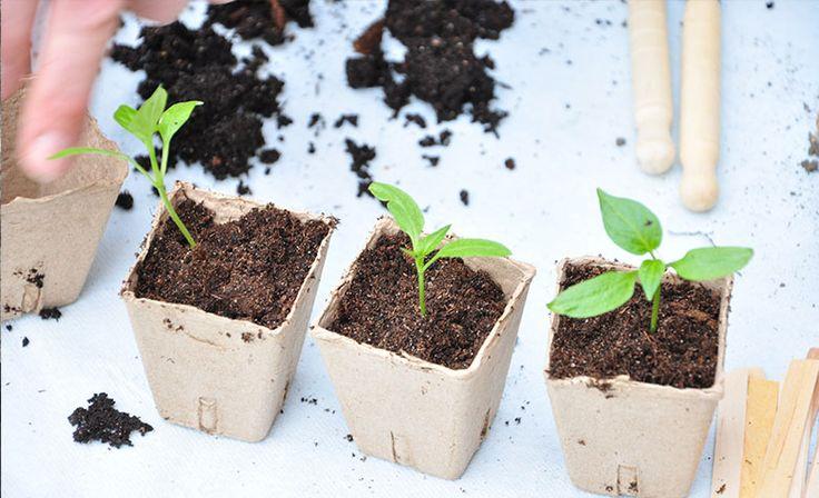 Fra vuggestue til børnehave, lær om omplantning