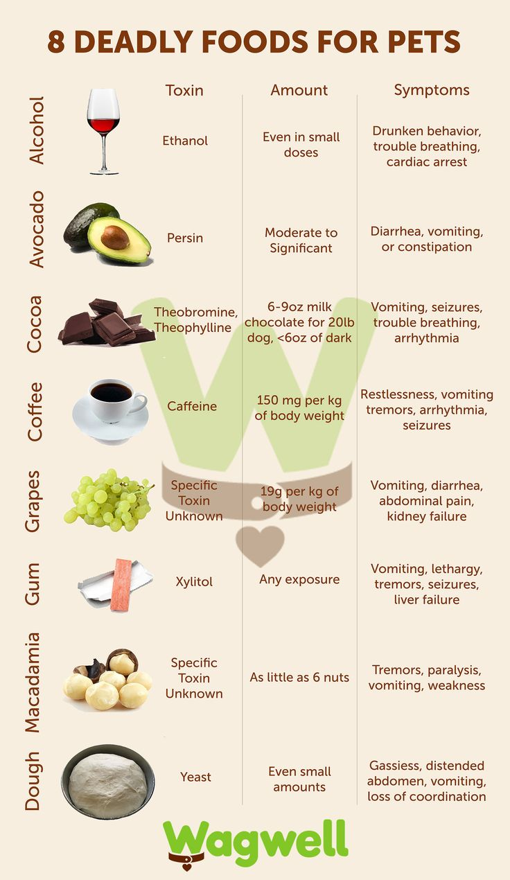 Deadly Foods For Cats