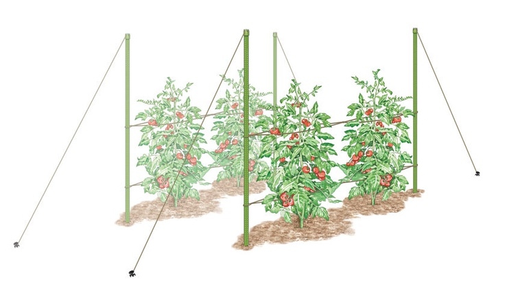 verge guide to wicking beds