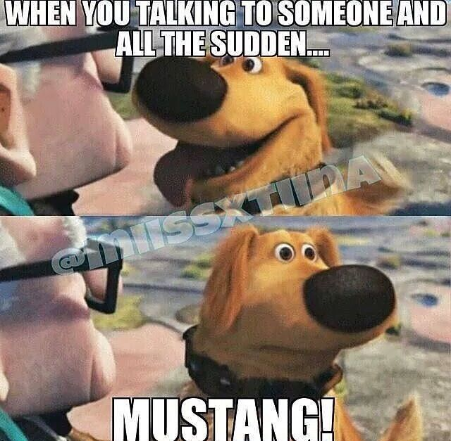 Mustang                                                                                                                                                                                 More