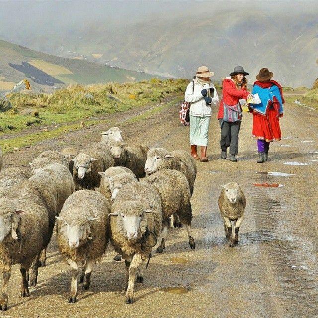 Sermon Feed My Sheep: Pin On Shepherds & Sheep