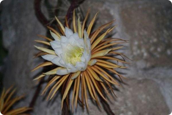 La regina della notte, quindi i fiori seguono l'orologio.
