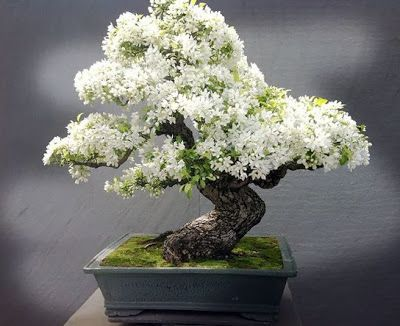 10 потрясающих мини-деревьев…