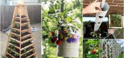 Daca esti pasionat de gradinarit, te invitam sa afli din articolul de astazi cum poti amenaja gradina cu plante suculente