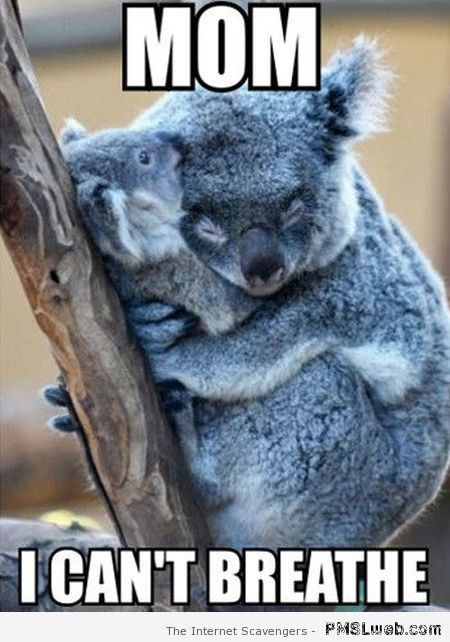 koalas meme - Google Search