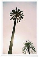 Palm Trees - Svenja Trierscheid - Premium Poster