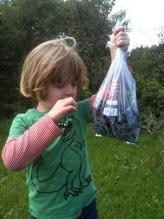 Little D counting his blackberry haul