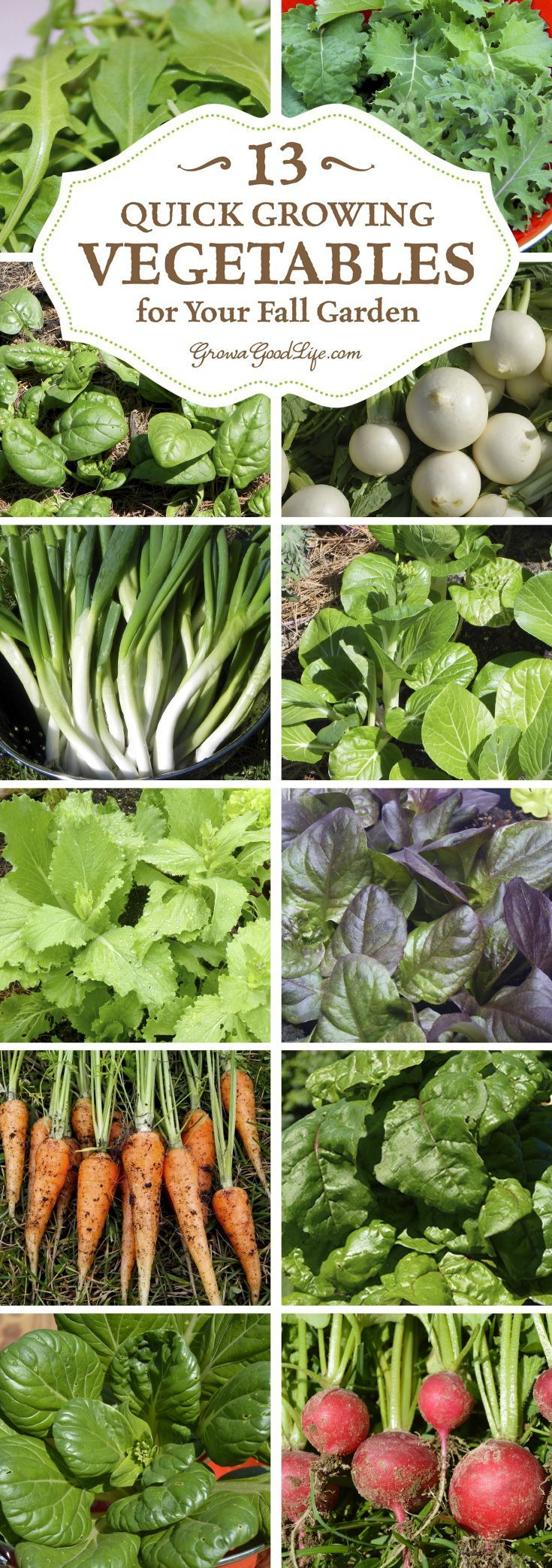Growing fall vegetables in colder climates can be a gamble, but these crops mature quickly so you can grow more food in your fall garden.