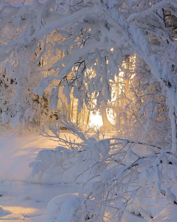 sunlit snowLights, Winter Snow, Sunris, Beautiful, Winter Wonderland, White, Trees, Wintersnow