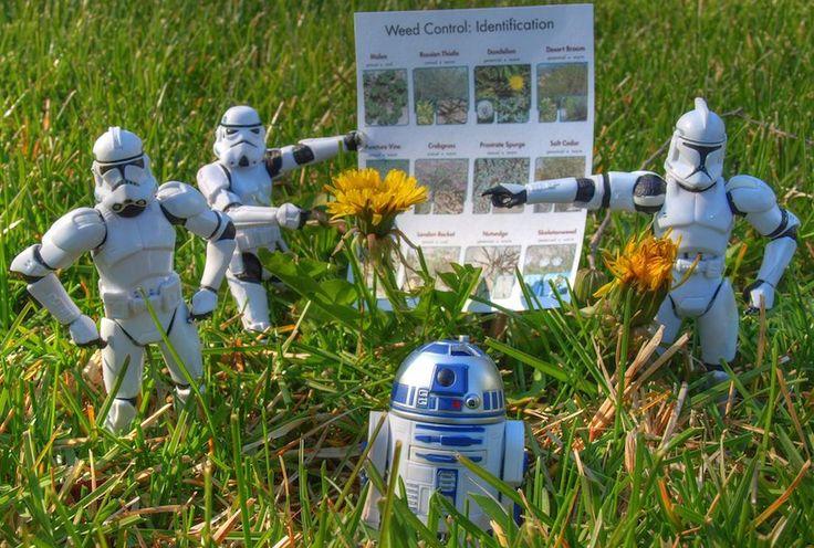 DIY Herbicide