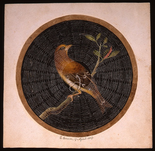 Valentine card by British Postal Museum & Archive on Flickr.Valentine card  'Square backing card. Circular image of a bird on a branch painted across paper cut in a criss-cross pattern. A cord attached to the paper allows the paper to be pulled out to form a domed cage to reveal two field mice'.   Date: 17 April 1817  British Postal Museum and Archive