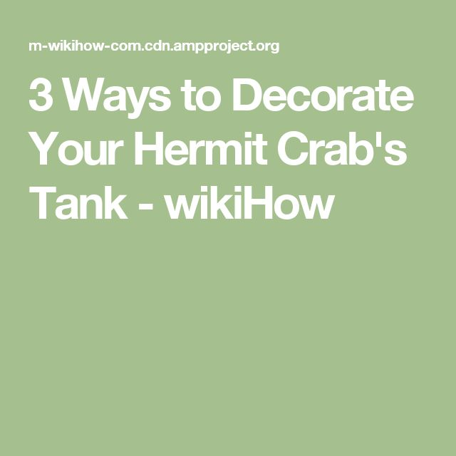 3 Ways to Decorate Your Hermit Crab's Tank - wikiHow
