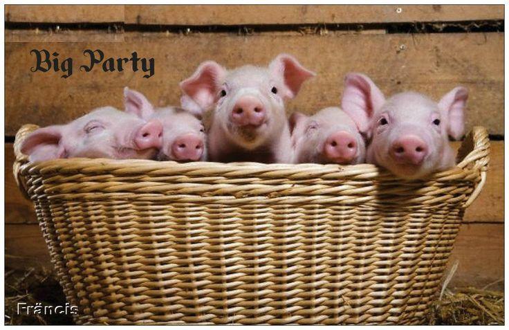 http://varkenscollectie.jouwweb.nl/varkenskaarten