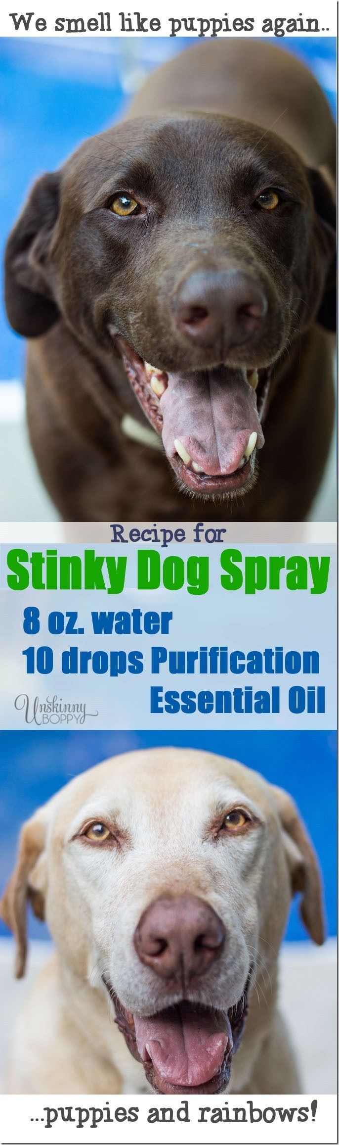 Recipe for Stinky Dog Spray - mix water   with purification essential oils sold by Young Living   distributors