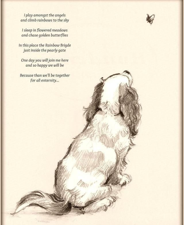 Dog Angel Quotes: 878 Best Images About Rainbow Bridge/animal Sayings On