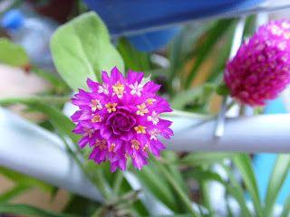 Sehat Idamanku: WOW..!! Selain Indah dan Cantik Bunga Ini Multikha...