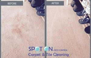 We can remove everything, from red wine stains to ink, coffee, blood, rust, makeup and even oils, so no job is too big or too small for our talented team.