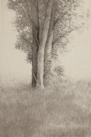 Shigeki Tomura. Nature, Summer VII 2009. Drypoint, chine colle 5/12. 5 3/4 x 3 3/4 inches. $400