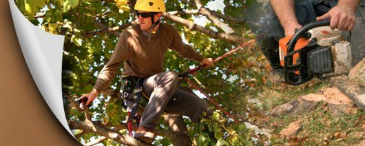 RT https://t.co/cF5Bg7INrw When you call Gibbs Tree Service you can rest assured that they will cover all aspects of #TreeService #HotSprings AR. They are the professional experts who have exten https://t.co/84LKF2muai #torontobusiness https://t.co/1SWQzC94b8