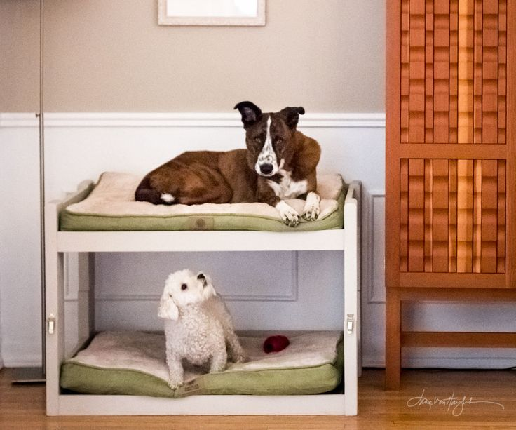 "Create your own doggie bunk beds!I bought two of these: American Kennel Club Solid Suede Gusset Pet Bed with Fur Top and the dimensions are 36"" wide x 27"" deep so that is the size of beds these plans are designed to fit. If you already have dog beds or are buying beds of a different size, adjust the measurements to fit your beds.**EDIT** The AKC dog beds are cr@p. I washed one cover and it fell apart. Just bought this Molly Mutt dog bed duvet and stuff sack in size Medium/Large. I l..."