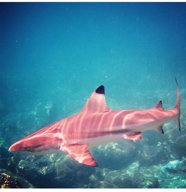 Very rare PINK shark...and yes, it's real! PINK, PINK, YOU STINK! ROFLMAO. Very beautiful/awesome!!!
