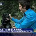 Heroic Dog Saves Baby From Abusive Babysitter | Fox News Insider