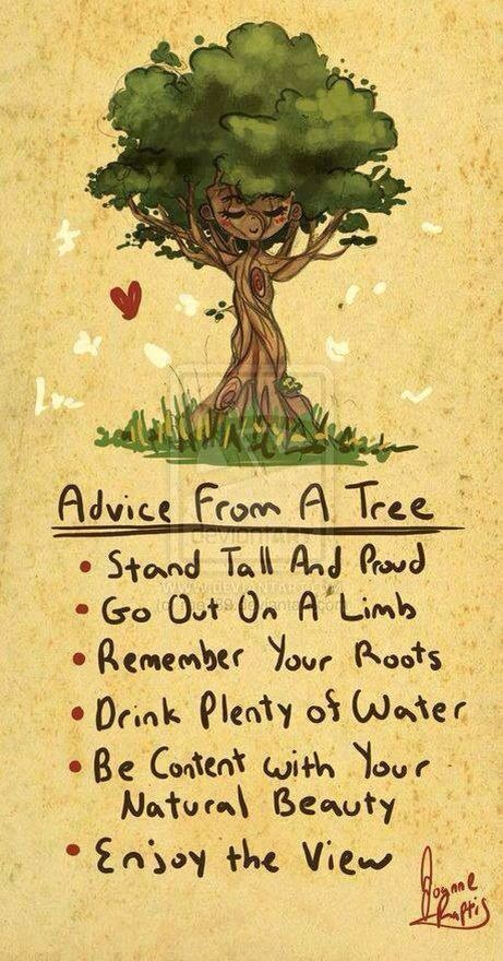 Advice from a tree | follow @sophieeleana