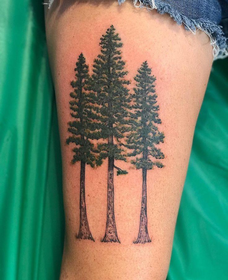 Best 25 pine tattoo ideas on pinterest pine tree tattoo for Ponderosa pine tattoo