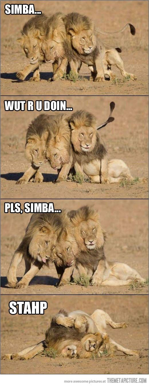 Drunk Lions… | Hakuna matata, To find out and Friends