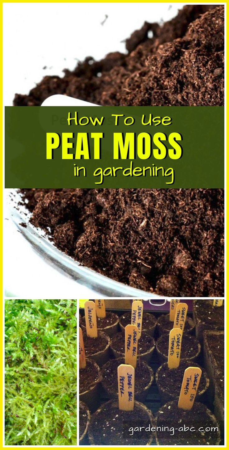 A basic Idea about Peat Moss in 2020 Peat moss, Peat