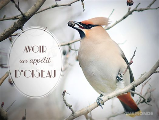 [Expression du jour] Avoir un appétit d'oiseau Literally: To have the appetite of a bird Meaning: To not eat much