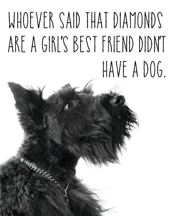 Black Scottish Terrier Print / Dog Quote Print / by MadKittyMedia